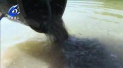 【温视频】温州瑞安:增殖放流31万尾光唇鱼